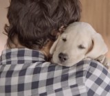 Budweiser's Puppy Convinces You Not To Drink and Drive